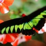 В Доминикане открылся парк бабочек