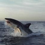 В Сочи открылись курсы поведения при встрече с акулами