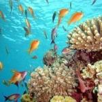 Красное море в Египте вновь закрыли для купания и дайвинга