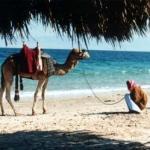 Египетские гиды призывают туристов вернуться
